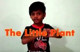 The Little Plant Poem with Action